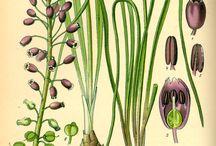 Illustrazione botanica / by Anna Mirizio