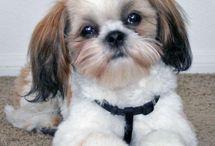 Puppy Love / by Kristy Montemayor