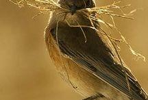 Ptáčci a jejich hnízda