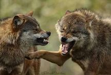 Женщина Волк