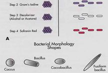 Bacter