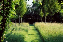 garden lines
