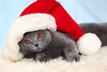 ¡Animalitos navideños! / Hhermosas fotos de perritos con atuendos de Navidad. ¡Te invitamos a compartir la foto de tu mascota! :)