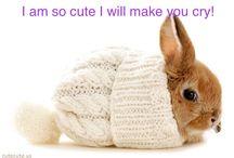 Bunnies / These bunnies will melt your hart❤️