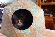 Katten en karton... / Katten en karton... een perfecte combinatie.