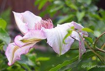 Flowers / Kwiaty w fotografii