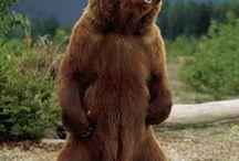 bear jew