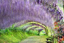 Beautiful Scenery 31 Selection in Japan(日本の美しい風景31選)