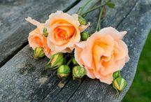 Kwiaty / róże