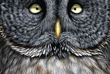 Owls / by Kathy Spilman