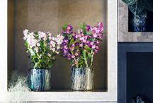 Kamerplanten met bloemen