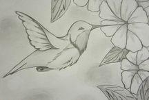 pasarea colibri
