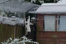 There's no cats like snow cats / Cats enjoying snow, winter weather and access to their outdoor paradises :)