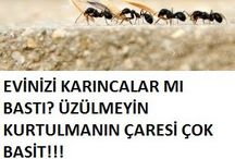 Arı sinek karınca