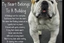 My Future doggy ;)