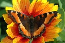 Farfalle e c.