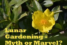 Lunar Gardening / Farmers and Gardeners have practiced Astrological or Moon Gardening for hundreds of years.