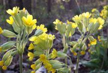Wildkräuter-Kalender März / Wildpflanzen-Erntekalender für den Monat März