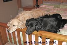 Dogs / One of my favorite things....My first dog was a black lab that my sister's boyfriend got her for birthday. Well, he didn't know she wasn't a dog person but this wonderful animal because my best friend & taught me the meaning of unconditional love.