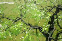 2018년 나무벗꽃등