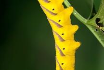 Papillons - Butterflies / Papillon - Beautiful butterflies