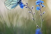 Perhoset & sudenkorennot