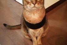 Cat  猫の 小鉄 / 2006年生まれの猫 小鉄