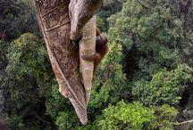 World Press Photo - Best Wildlife Photos of the Year 2015