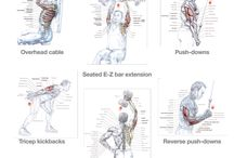 Triceps 1