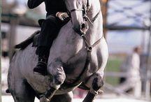 equitation travail