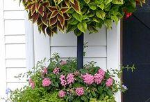 Záhradka v kvetináči