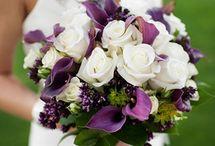violet anis