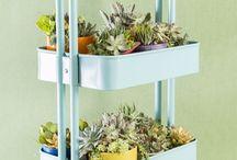 Indoor Garden / Indoor garden DIY craft ideas