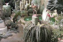 botanic vm
