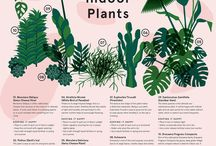 The Small Garden - Infographics