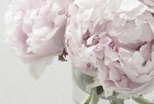 FLOWERS. / flower power