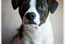Dog stuff / by Karissa Anderson