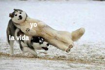 Momos :v