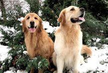 wonderful  dog's