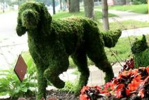Tips for topiary!