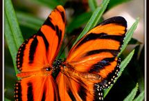 Colourfull Butterflys