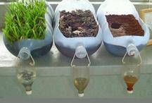 Gardening Unit Study / by Sarah Merillat