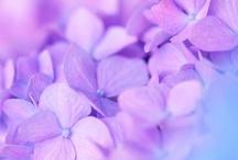Flowers / Vakre blomster
