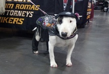 Service dog vests and gear