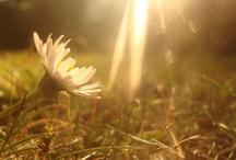 Breathe in Light