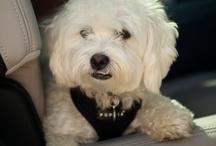 I Heart Pets! / Pets Are Loyal, Great Companions And Make My Heart Happy :)