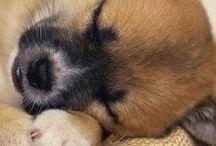 Puppers / by Jennifer Selvaggi