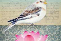 Artsy Birds / by Leah Fox