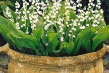 Byliny Cień / Piękne byliny do cienistego ogrodu