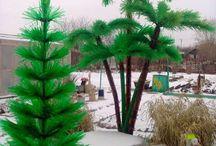 Vyfoba z flias palma